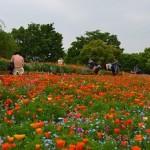東京昭和記念公園
