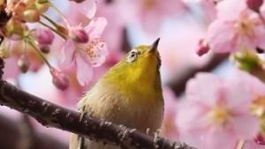 子供と行く広島の花見スポット8選!今から春が待ち遠しい!