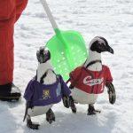 子供と行くなら!広島でキッズパークのあるスキー場おすすめ10選