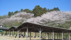 花見&バーベキューならココ!奈良のイチ押しスポット8選