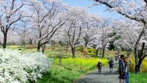 花見&バーベキューならココ!埼玉のイチ押しスポット8選